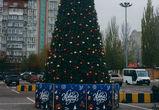 В Воронеже начали устанавливать новогодние елки