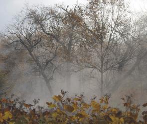 Воронежцев предупредили о заморозках и похолодании до минус 8 градусов