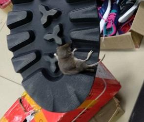 В воронежском магазине новые ботинки продавались вместе с мертвой землеройкой