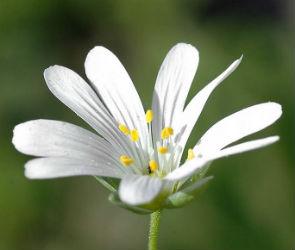 13,5 млн рублей собрала акция «Белый цветок» в Воронежской области в 2018 году