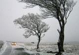 Какая погода ожидается зимой в Воронеже, рассказал главный синоптик региона