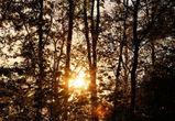 В выходные в Воронеже потеплеет до +3°C
