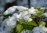 Воронежцам обещают небольшие заморозки, дождь и первый снег в ближайшие дни