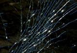 Под Воронежем молодой водитель погиб, врезавшись в дерево