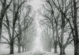 В выходные в Воронеже возможен снег