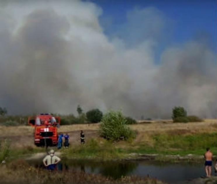 Воронежские власти хотят передать лес у полигона «Погоново» военным