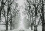 Снежные выходные и потепление обещают воронежцам