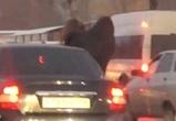 В Воронеже девушки станцевали, высунувшись из окна движущейся машины – видео