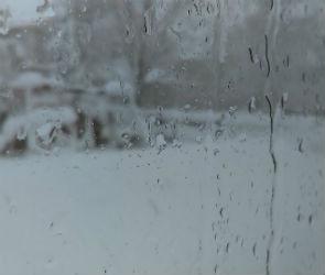 В Воронеже ожидаются дождь и потепление