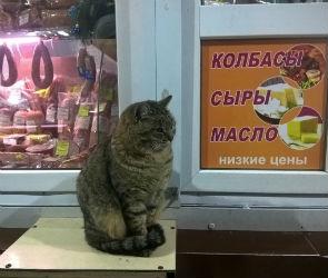 Кота-консультанта по колбасным изделиям сфотографировали в Воронеже