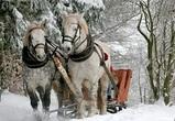 Синоптики рассказали, стоит ли воронежцам ждать настоящей зимы до Нового года