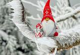 На Рождество в Воронеже похолодает до -15°C