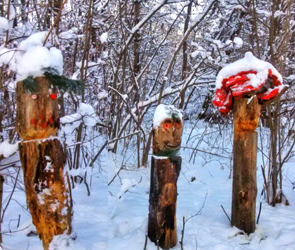 В Воронеже в лесу на Ломоносова нашли лесных духов в веселых шапках (фото)