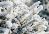 Снег и потепление обещают воронежцам на рабочей неделе