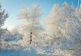 Сильные морозы придут в Воронеж на рабочей неделе