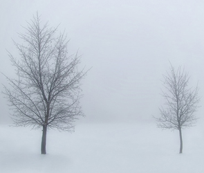 Из-за сильного тумана и мороза в Воронеже объявлен желтый уровень опасности