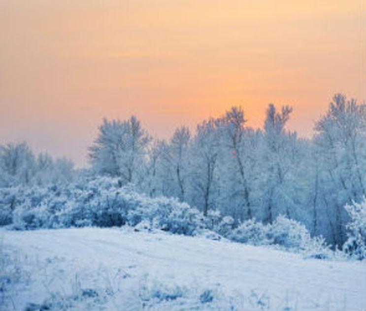 Высота снежного покрова в Воронеже достигла максимума
