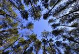 Воронеж может остаться без защиты «зеленого щита»