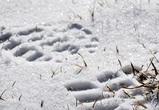 В Воронеже 9-летний мальчик провалился в яму