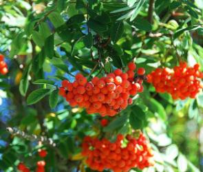 Весной в Воронеже посадят более тысячи деревьев