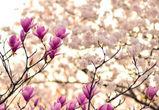 В Воронеж придет «Крымская весна»