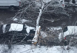 В Воронеже ветхое дерево рухнуло на парковку у магазина и разбило иномарку: фото
