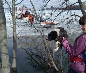 Воронежцы спасли щенка, оказавшегося на льду водохранилища