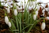Синоптики: В начале апреля в Воронеж вернутся заморозки