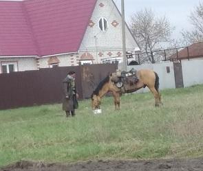 Под Воронежем заметили путешествующую на коне итальянку