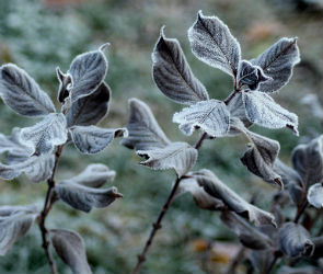 В Воронеже ожидаются заморозки