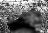В Воронежской области после столкновения двух ВАЗов погиб 22-летний парень