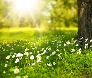 Антициклон принесет в Воронежскую область летнее тепло и солнце