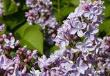 Настоящая летняя погода придет в Воронеж в первые рабочие дни мая