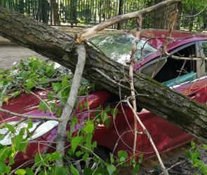 В центре Воронежа рухнувшее во время грозы дерево разнесло иномарку: ФОТО