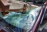 Во время урагана в Воронеже на авто падали столбы, беседки и деревья - фото