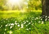 По-летнему теплая неделя ожидает воронежцев
