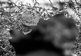 Молодая автомобилистка спровоцировала ДТП в центре Воронежа: пострадал младенец