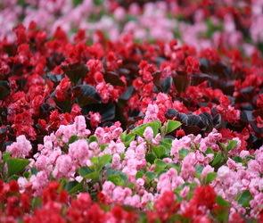 В Воронеже оформят более 200 цветников