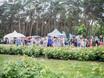 Семейный фестиваль «Много молока» в парке «Алые паруса» 178497