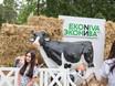 Семейный фестиваль «Много молока» в парке «Алые паруса» 178534