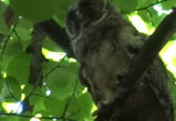 Очаровательного совенка сняли на видео в парке Воронежа
