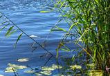 14-летний мальчик утонул под Воронежем
