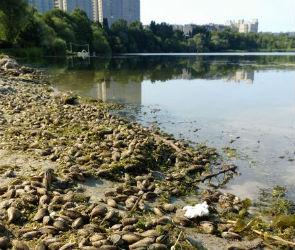 Очевидцы сообщили о массовой гибели моллюсков в воронежском водохранилище