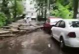 В воронежском дворе рухнувшее во время грозы дерево повредило машину