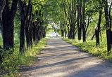 В Воронеже 6 парков и скверов обработают от клещей и комаров