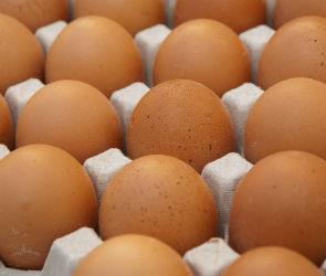 В Воронежской области появятся три птицефабрики производительностью 600 млн яиц