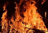 В Воронежском заповеднике произошел пожар