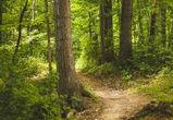 Три подростка заблудись в лесу под Воронежем