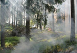 Июль станет самым пожароопасным периодом в этом году в Воронежской области
