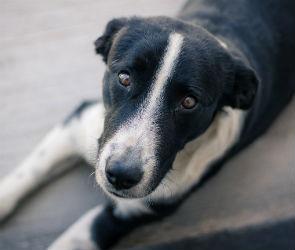 В Воронеже появился совет по вопросам обращения с бездомными животными